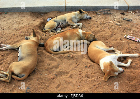 A group of stray dogs sleeping - Stock Photo