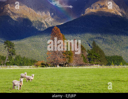 Mountain landscape with forest and grazing sheep, South Island, New Zealand - Stock Photo