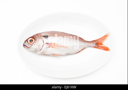 Pezzogna fish, variety of sea bream, on white plate and white background - Stock Photo