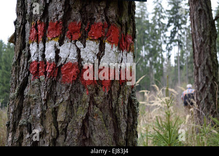 Trail markings on old tree - Stock Photo