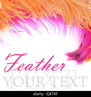 Pink beautiful feather isolated on white - Stock Photo