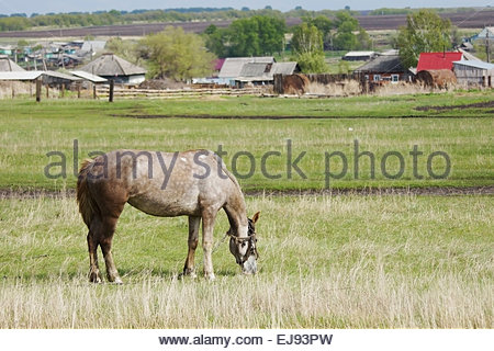 Horse grazing on the outskirts of a village - Stock Photo