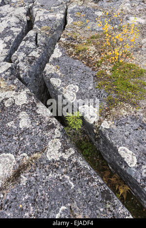 planted crevices, Lapland, Sweden - Stock Photo