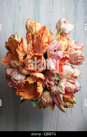 Apricot and Salmon Parrot Tulips in bouquet - Stock Photo