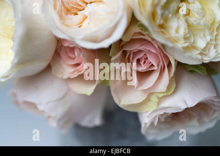 bouquet of david austin english rose patience with other english and garden roses photographed - White Patience Garden Rose