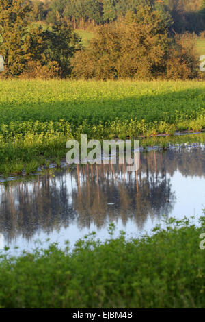 Treetops reflected in puddle - Stock Photo
