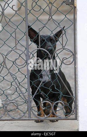 dog behind fence - Stock Photo
