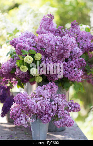 Cut stems of lilac blossoms (Syringa vulgaris)  and Snowball Bush (Viburnum opulus 'Roseum') in spring - Stock Photo