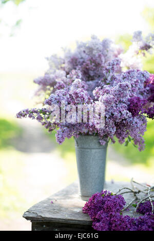Cut stems of lilac blossoms (Syringa vulgaris) in spring - Stock Photo