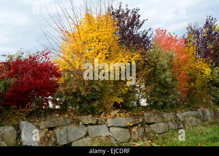 autumn shrubs for privacy - Stock Photo