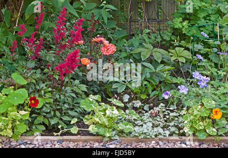 Detail of mixed herbaceous and shrub border in English garden with contrasting colours and shapes of foliage and - Stock Photo