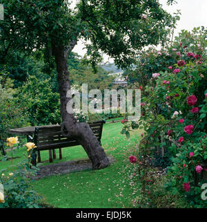 Wooden bench against old tree on sloping lawn in country garden with pink roses in the borders - Stock Photo