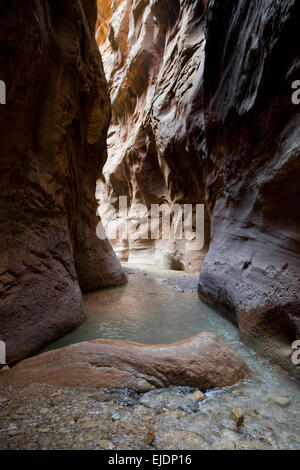 The Narrows in Zion National Park remains one of the most popular hikes. - Stock Photo
