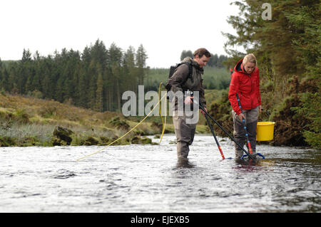 Westcounty Rivers Trust  electro fishing on the east dart river at Bellever Bridge,  Bridge Dartmoor National Park - Stock Photo