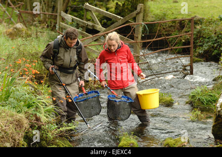 Westcounty Rivers Trust electro fishing on the Wast Webburn River at Pitton Farm ,  Bridge Dartmoor National Park - Stock Photo