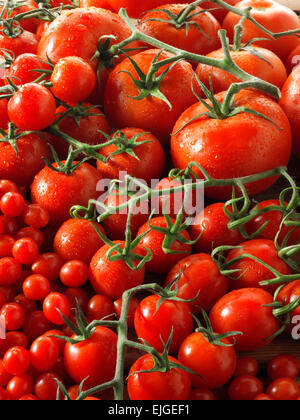 mixed fresh red whole tomatoes on the vine - Stock Photo