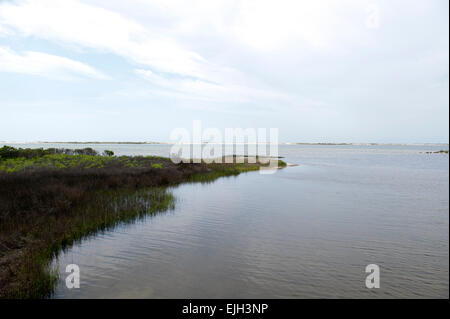 Shoreline at Big Lagoon State Park in Pensacola Floria - Stock Photo