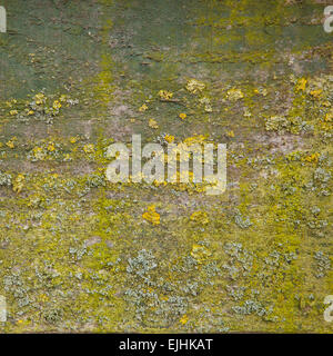 pattern of moss in shades of green on old wood - Stock Photo