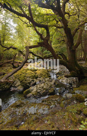 A scenic view in Tollymore Forest Park, Northern Ireland - Stock Photo