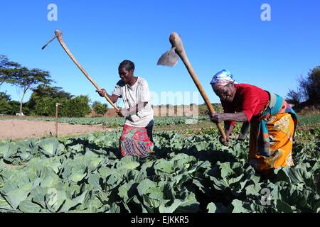 Women farmers work in a vegetable field in Ibenga, Sambia, Africa - Stock Photo