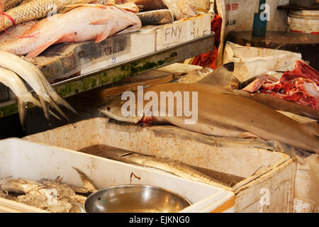 Fish's on the market in Singapore.Shark and other fresh fish.Horizontal view. - Stock Photo