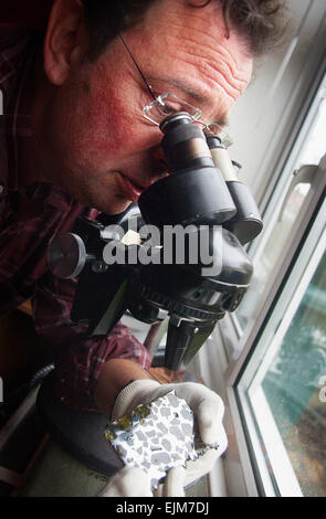 Dave Harris from Portslade studies an Esquel meteorite  . Photograph taken  2004 - Stock Photo