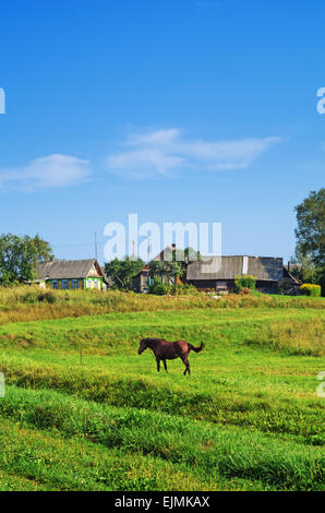 Rural landscape. Brown horse on pasture. - Stock Photo
