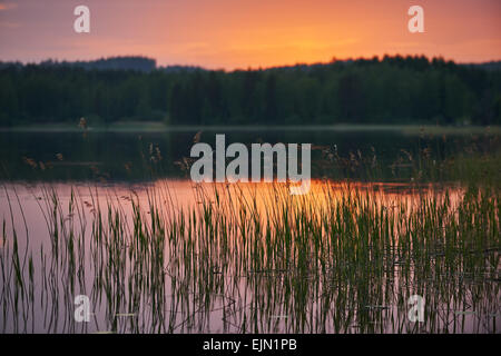 Finnish lake at sunset with water plants in focus and background intentionally blurred - Stock Photo