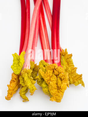 Fresh forced Yorkshire rhubarb with leaves - Stock Photo