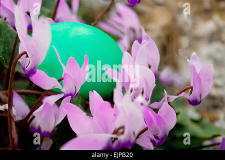 Closeup on green egg in a lilac cyclamen bush hidden for Easter hunt - Stock Photo