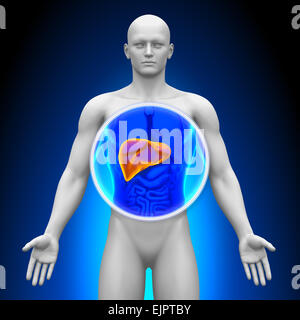 Medical X-ray Scan - Liver Anatomy - Stock Photo
