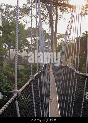 View along canopy walkway through tropical rainforest in early morning, Kakum N.P., Ghana, February - Stock Photo