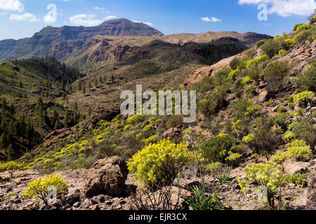 Mountain landscape with flora in Soria, Gran Canaria, Canary Islands, Spain - Stock Photo