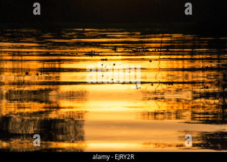 View of a fiery orange sunset being reflected in a river in the Amazon rainforest near Iquitos, Peru - Stock Photo