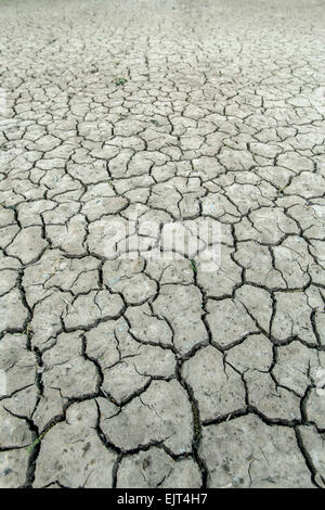 Cracked mud in pecan orchards near Las Cruces, New Mexico USA - Stock Photo