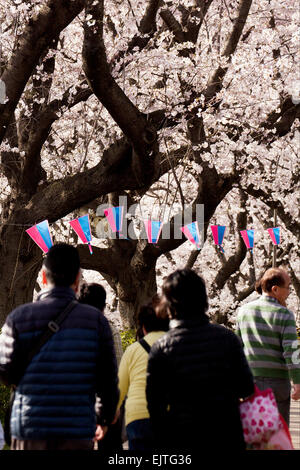 Saitama, Japan. 31st March, 2015. People enjoy viewing the cherry blossoms in full bloom at Gongendo Park, Saitama, - Stock Photo