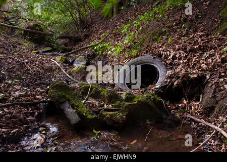 Rubbish and waste dumped in a woodland stream. - Stock Photo