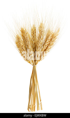 Ears of ripe wheat isolated on white background - Stock Photo