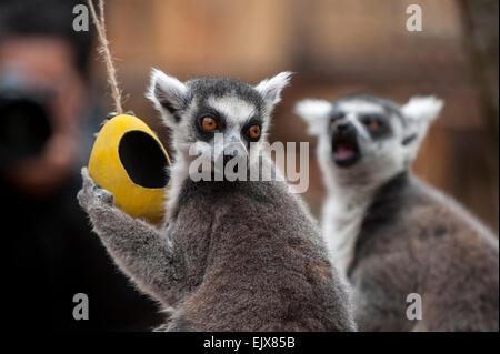 Egg, Eggs - Black Lemur On Drugs