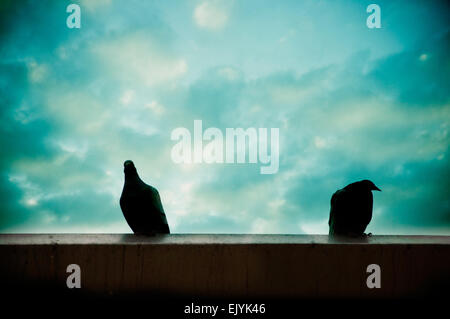 two pigeons silhouette - Stock Photo