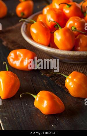 Raw Organic Orange Habanero Peppers on a Background - Stock Photo