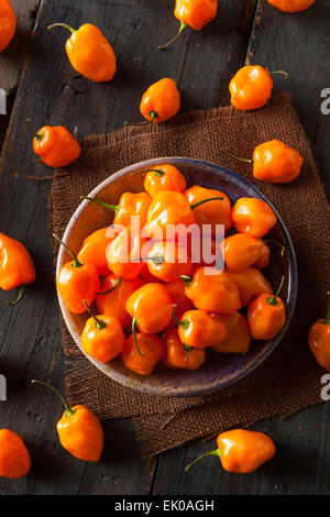 Raw Organic Orange Habanero Peppers on a Background - Stock Photo