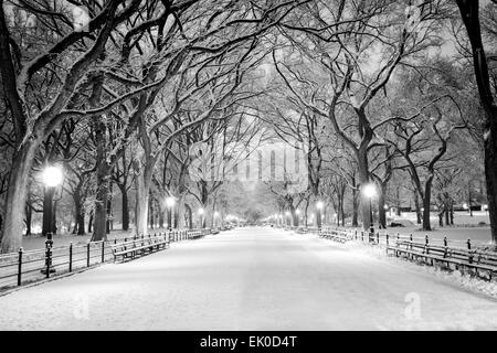 The Mall, Central Park, NYC, during a snow storm, early in the morning. - Stock Photo