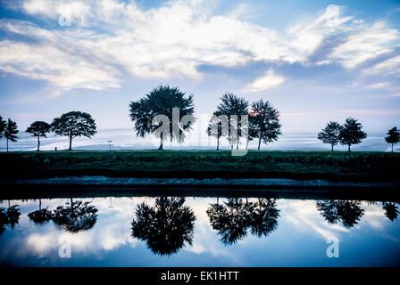 trees on levee - Stock Photo