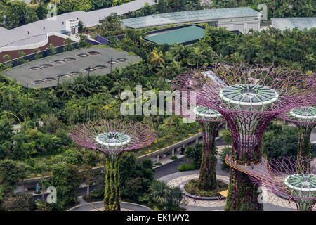 singapore august 5 2014 supertree grove at gardens by the bay in singapore