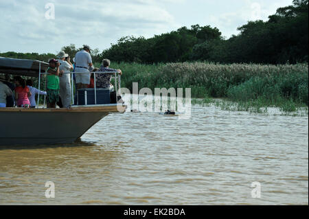 Tourists on boat based safari looking at Hippopotamus in water next to reed beds at St Lucia estuary, iSimangoliso - Stock Photo