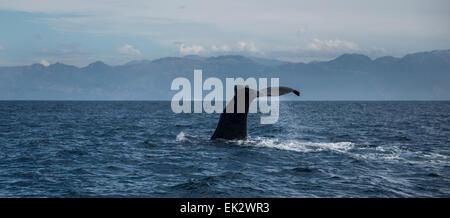 Whale spotting at Kaikoura, south island, New Zealand. - Stock Photo