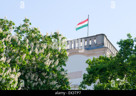 Hungarian Flag in the Tower with Flowering Buckeye Tree - Stock Photo