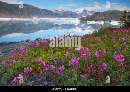 Bear Glacier Lagoon, Kenai Fjords National Park, near Seward, Alaska. - Stock Photo