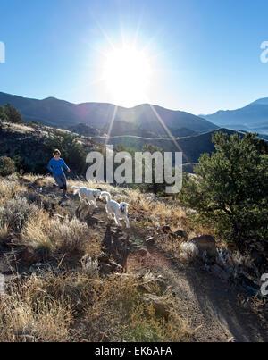 Woman & dogs running on mountain trails near Salida, Colorado, USA - Stock Photo